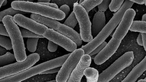 Gut-microbes-may-have-role-in-autoimmune-protection-Study_strict_xxl