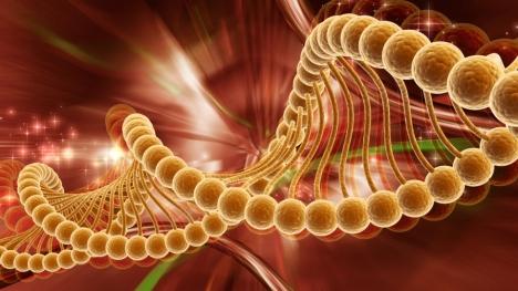gene - cancer tumors